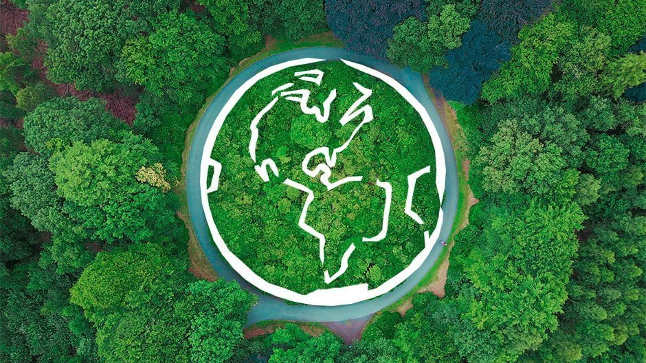 Why Is Sustainable Timber Important?